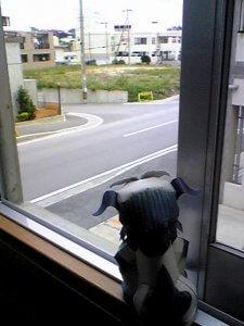 外を眺めるシーサー