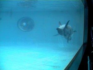 水族館のイルカ