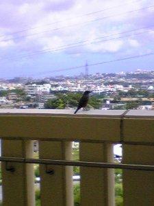 遠くを見つめる鳥