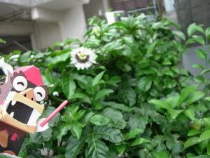 花とミニシーサー